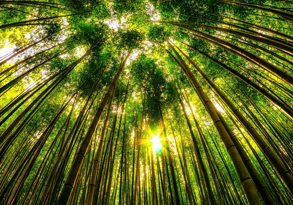 View of the bamboo forest taken with the fisheyes in damyang bamboo forest in damyang, south korea